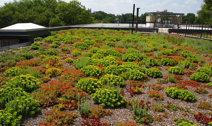 Green roof on Sidwell Friends School