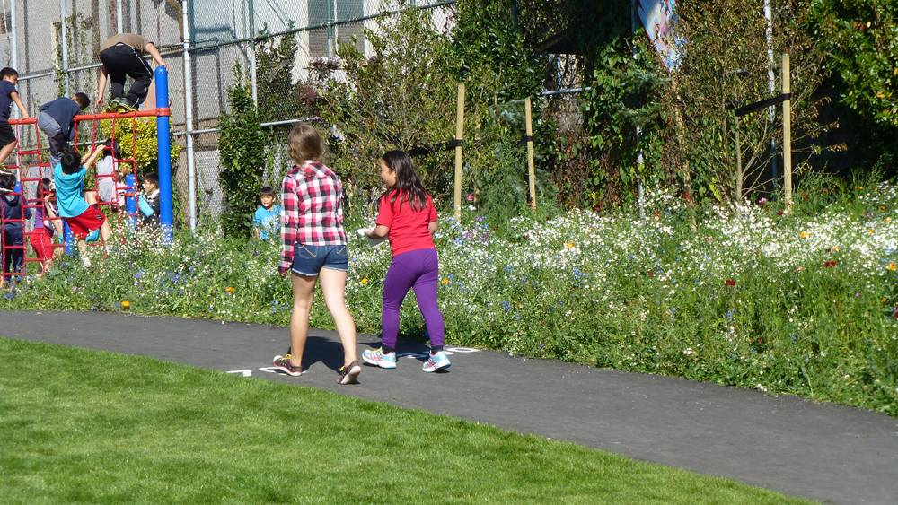 Flowering meadow surrounds play equipment and asphalt track