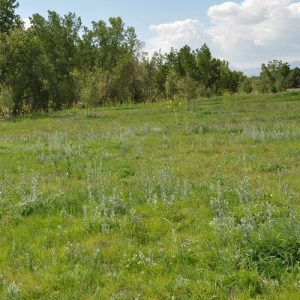 A dry meadow with native plants is low maintenance and supports local fauna