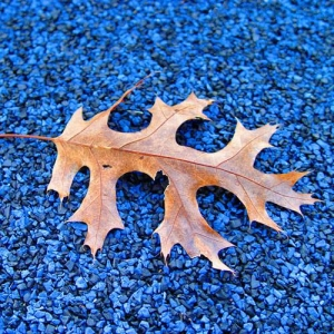 Leaves from nearby trees will find their way to any surface