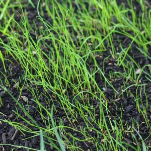 Establishing grass from seed is a great option for those with patience