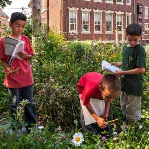 School garden in Boston