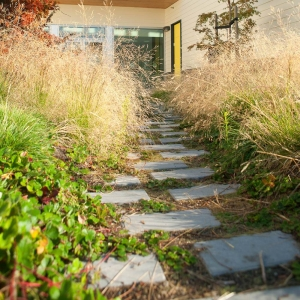 Grasses line the pathway to the kindergarten door