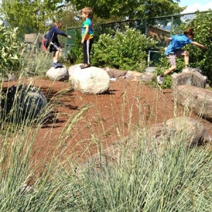 Shrubs and grasses in a revitalized schoolyard