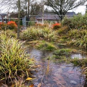 A rain garden temporarily fills with water