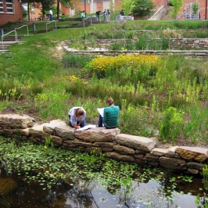 The plants in this rain garden and pond purify the water