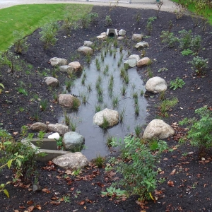 Planted swale