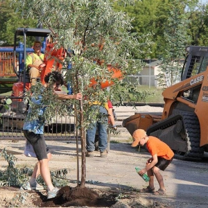 Planting a new tree in the asphalt