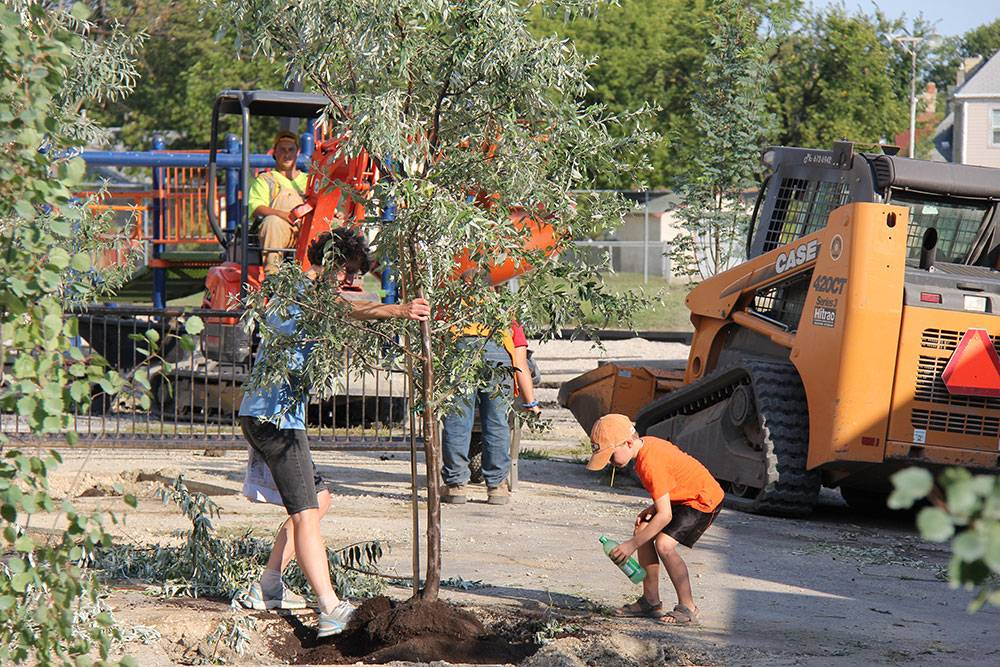 Tree Planting: New trees in the star-shaped voids