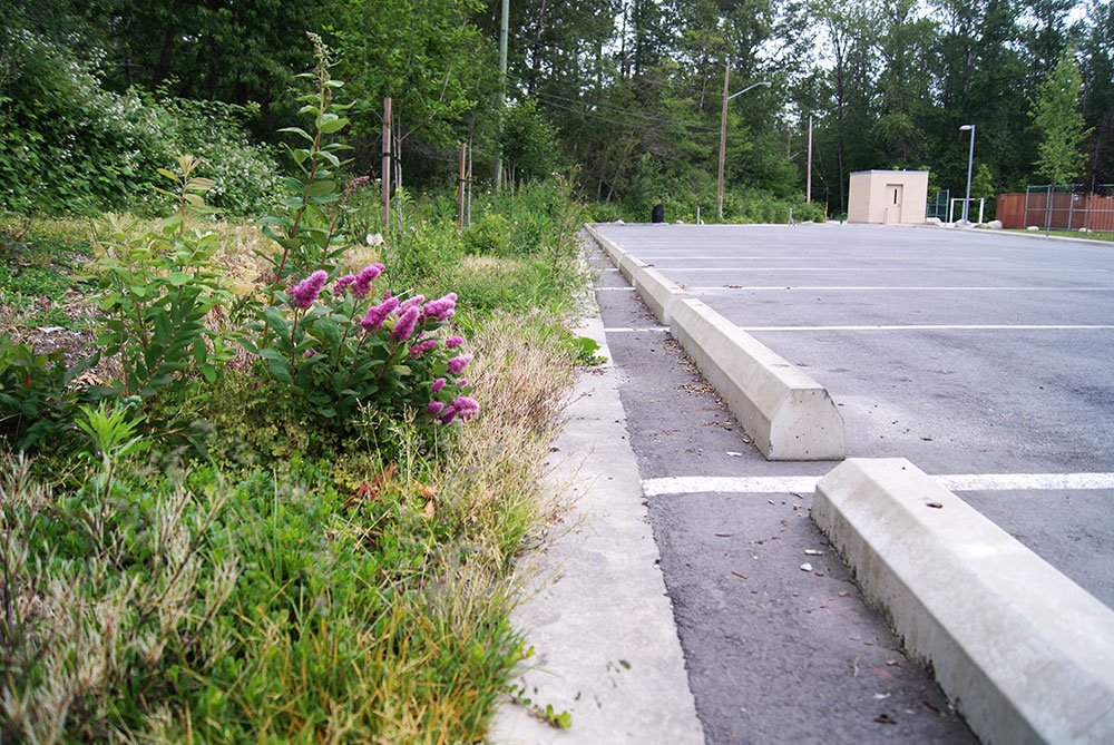 Being on top of weeds will keep this stormwater detention strip looking great. (Photo: Heather Scott)